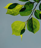 Grün-Blätter Stockbilder