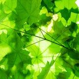 Grün Blätter Stockbild
