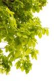 Grün Blätter stockbilder