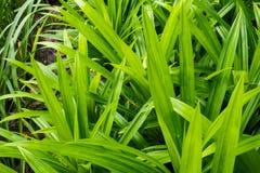 Grün Blätter Stockfoto