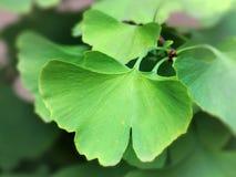 Grün Blätter Stockfotografie