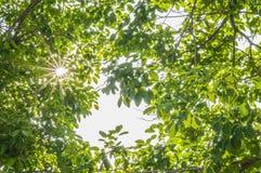 Grün Blätter Lizenzfreies Stockfoto