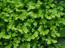 Grün Blätter stockfotos