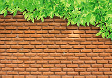 Grün-Blätter auf Backsteinmauer Lizenzfreies Stockfoto