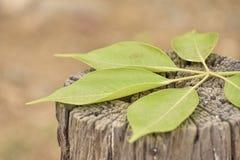 Grün-Blätter, die auf Baumstamm liegen stockfotografie