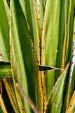 Grün-Blätter in einem Park Stockfoto