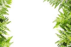 Grün-Blätter für Rahmen auf weißem Hintergrund, Natur-Grenze stockbild