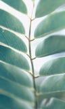 Grün Blätter nave lizenzfreie stockfotografie