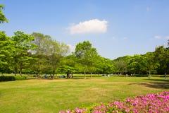 Grün-Blätter und ein Park Stockbilder
