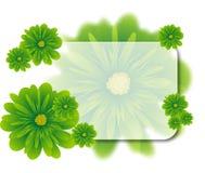 Grün blüht Hintergrund Lizenzfreie Stockbilder