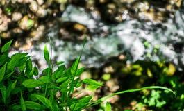 Grün des Sommers Stockbild