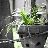 Grün in einsamem Stockfoto
