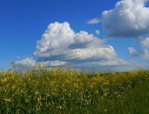 Grün fängt Sommersonnennatur-Betriebswald Deutschland auf Lizenzfreies Stockbild