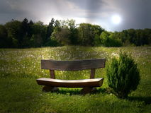 Grün fängt Sommersonnennatur-Betriebswald Deutschland auf Lizenzfreies Stockfoto