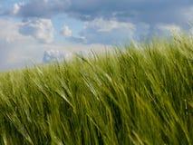 Grün fängt Sommersonnennatur-Betriebswald Deutschland auf Lizenzfreie Stockfotografie