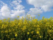 Grün fängt Sommersonnennatur-Betriebswald Deutschland auf Lizenzfreie Stockbilder