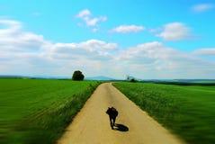 Grün fängt Sommersonnennatur-Betriebswald Deutschland auf Stockbild