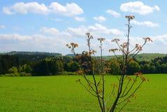 Grün fängt Sommersonnennatur-Betriebswald Deutschland auf Stockfotografie