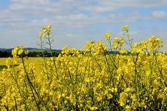 Grün fängt Sommersonnennatur-Betriebswald Deutschland auf Stockfotos