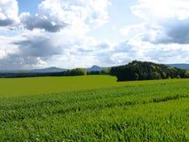 Grün fängt Sommersonnennatur-Betriebswald Deutschland auf Stockbilder