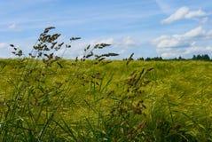 Grün fängt Sommersonnennatur-Betriebswald Deutschland auf Stockfoto