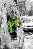 Grün für das Leben Lizenzfreies Stockbild