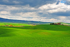 Grün-Felder Lizenzfreie Stockfotografie