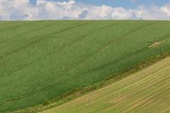 Grün-Felder im Frühjahr Lizenzfreies Stockfoto