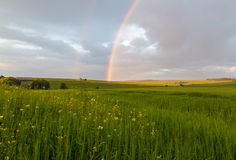 Grün-Felder mit Regenbogen Stockbild