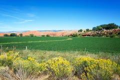 Grün-Felder und rote Hügel Stockfotografie