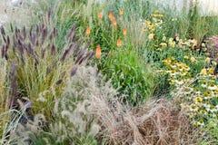Grün gartenbaulich, botanische Dekorationskräuter Gartenmarkt, Geschäft stockbild