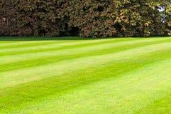 Grün gemähter Rasen Stockbild