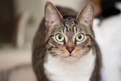 Grün gemusterte junge Katze stockbild