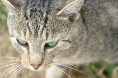 Grün gemusterte Katze Lizenzfreie Stockbilder