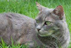 Grün gemusterte Katze Lizenzfreies Stockbild