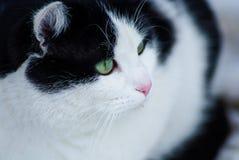 Grün gemusterte Katze Stockfoto