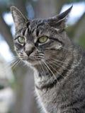 Grün gemusterter Tiger Cat Portrait Lizenzfreies Stockfoto