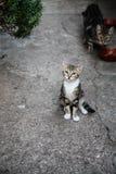 Grün gemustertes Kätzchen Stockfoto