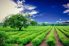 Grün gestalten landschaftlich stockbild
