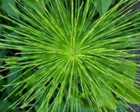 Grün hypnotisieren Lizenzfreie Stockfotografie