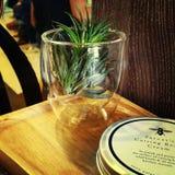 Grün im Glas stockfotografie