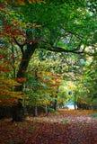 Grün im Herbst Stockfotografie