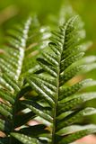 Grün im Wald Lizenzfreies Stockbild
