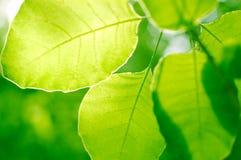 Grün lässt backgrond Lizenzfreies Stockbild