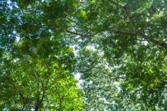 Grün lässt Baummuster Lizenzfreie Stockbilder