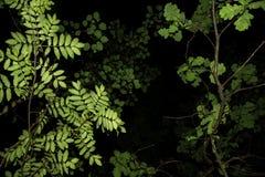Grün lässt Beschaffenheit auf Niederlassung auf schwarzem Hintergrund Stockfotos