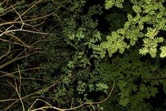 Grün lässt Beschaffenheit auf Niederlassung auf schwarzem Hintergrund Lizenzfreies Stockfoto