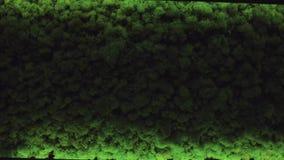 Grün lässt Beschaffenheitshintergrund, kleines Blatt Gestaltungsarbeit der Natur stock footage