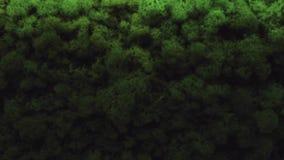Grün lässt Beschaffenheitshintergrund, kleines Blatt Gestaltungsarbeit der Natur stock video
