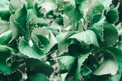 Grün lässt Beschaffenheitsnaturhintergrund Lizenzfreies Stockbild